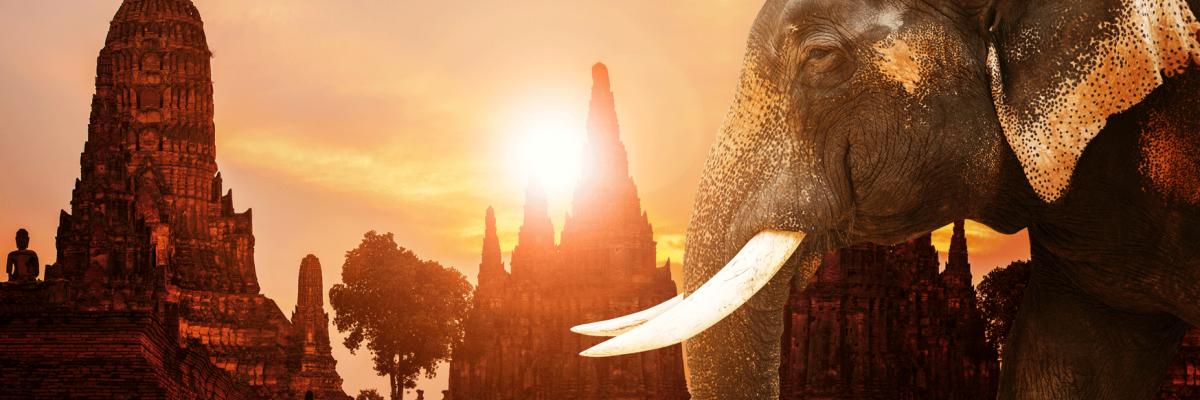 Bangkok thai elephant bangkok